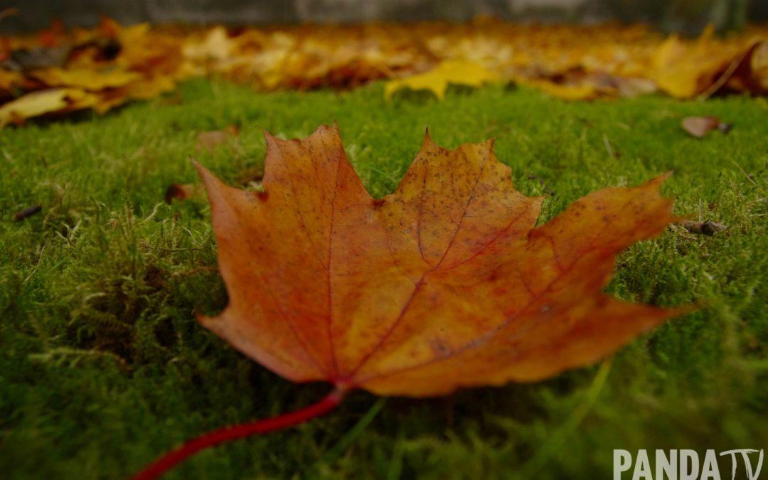 Jesień na Bielanach